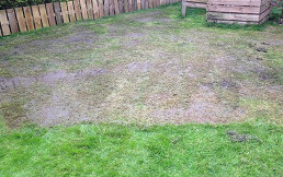 lawn stage 1